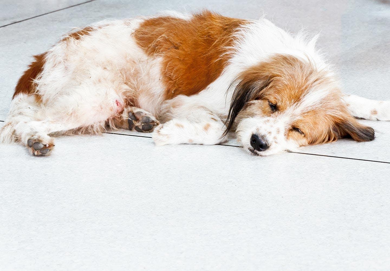 犬のうんちの回数・形状・臭いや見た目などからわかることは? 寝ている犬