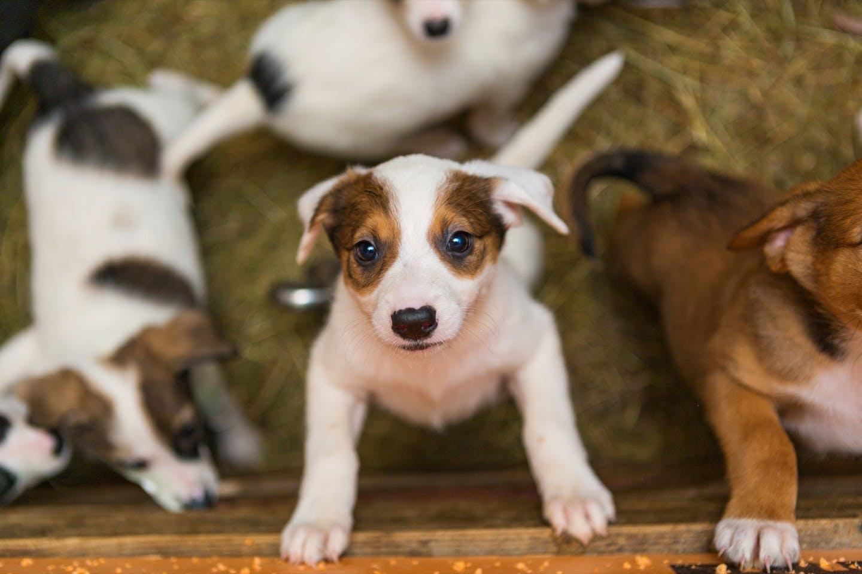 【獣医師監修】犬のフケやできものの原因は?皮膚の異常でわかる病気