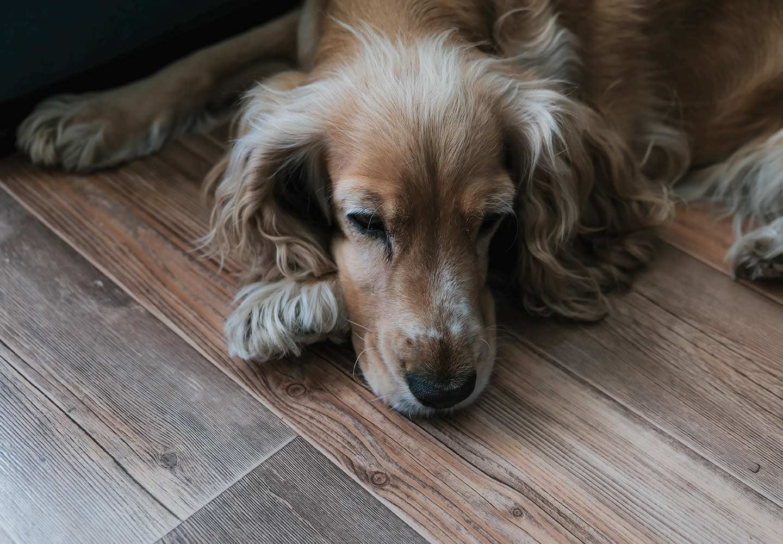 犬が誤飲・誤食した時の対処法は? ぐったりした犬