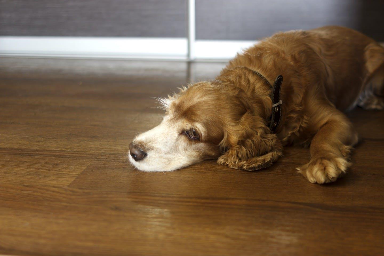 犬のストレス解消法!健康寿命を延ばすために取り入れたい8つの習慣