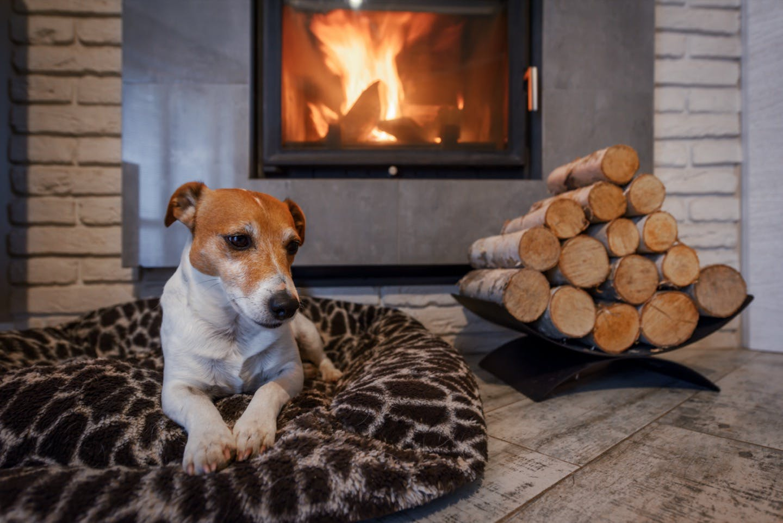 どう使えばいい?市販の暖房器具を使った愛犬の寒さ対策