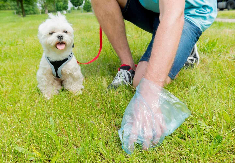犬のうんちの回数・形状・臭いや見た目などからわかることは? 犬のうんちを拾う