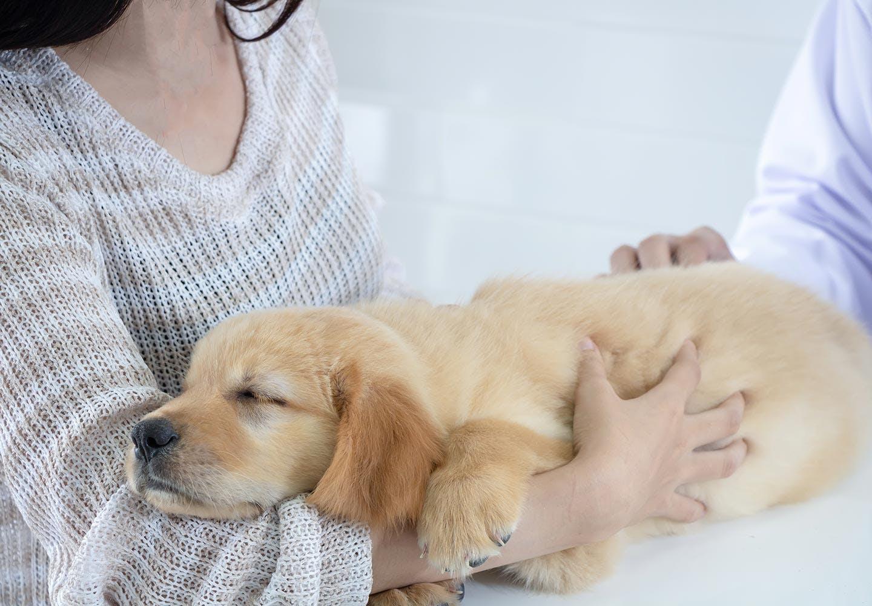 犬が誤飲・誤食した時の対処法は? 飼い主の腕に抱かれる犬