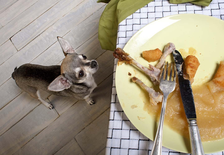 犬が誤飲・誤食した時の対処法は? テーブルを見上げる犬