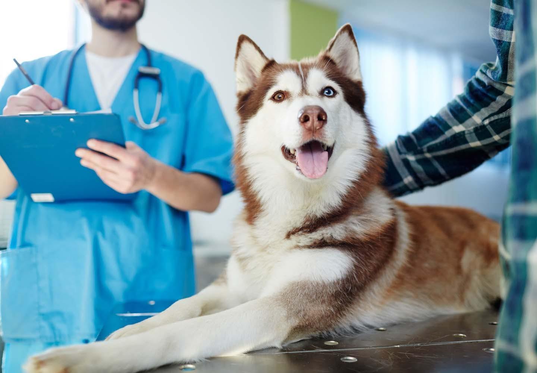 犬の健康診断は何歳から受ければいい?検査内容や費用感、必要な理由などについて解説【獣医師監修】