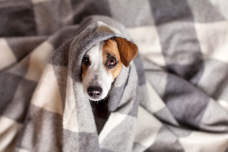 寒さで震える犬