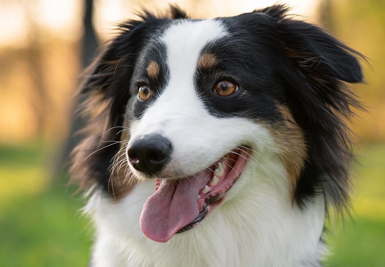 犬の口臭がひどい原因は?口が臭い場合のケアと病院へ行くべき症状について解説【獣医師監修】