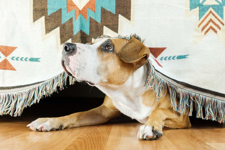 犬が震える原因とは?考えられる理由と病気の可能性、病院に行くべき症状を解説【獣医師監修】