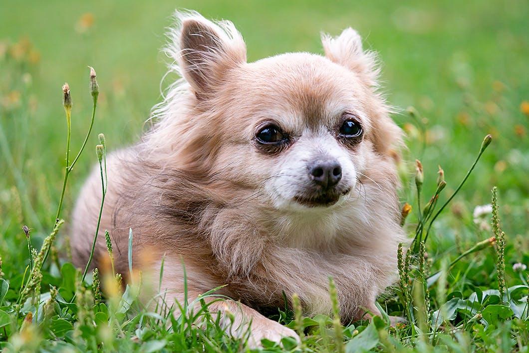 【獣医師監修】愛犬が不治の病になったら?介護の大切なポイント