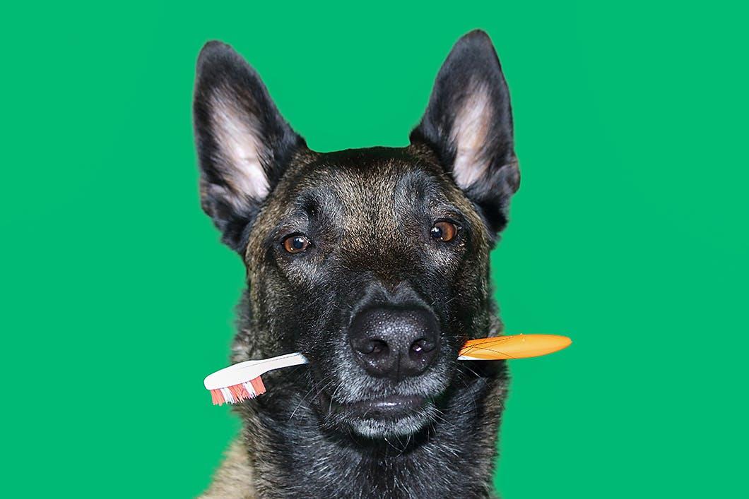 犬が歯磨きを嫌がるときの対処法は?「犬の歯磨きFAQ」をご紹介