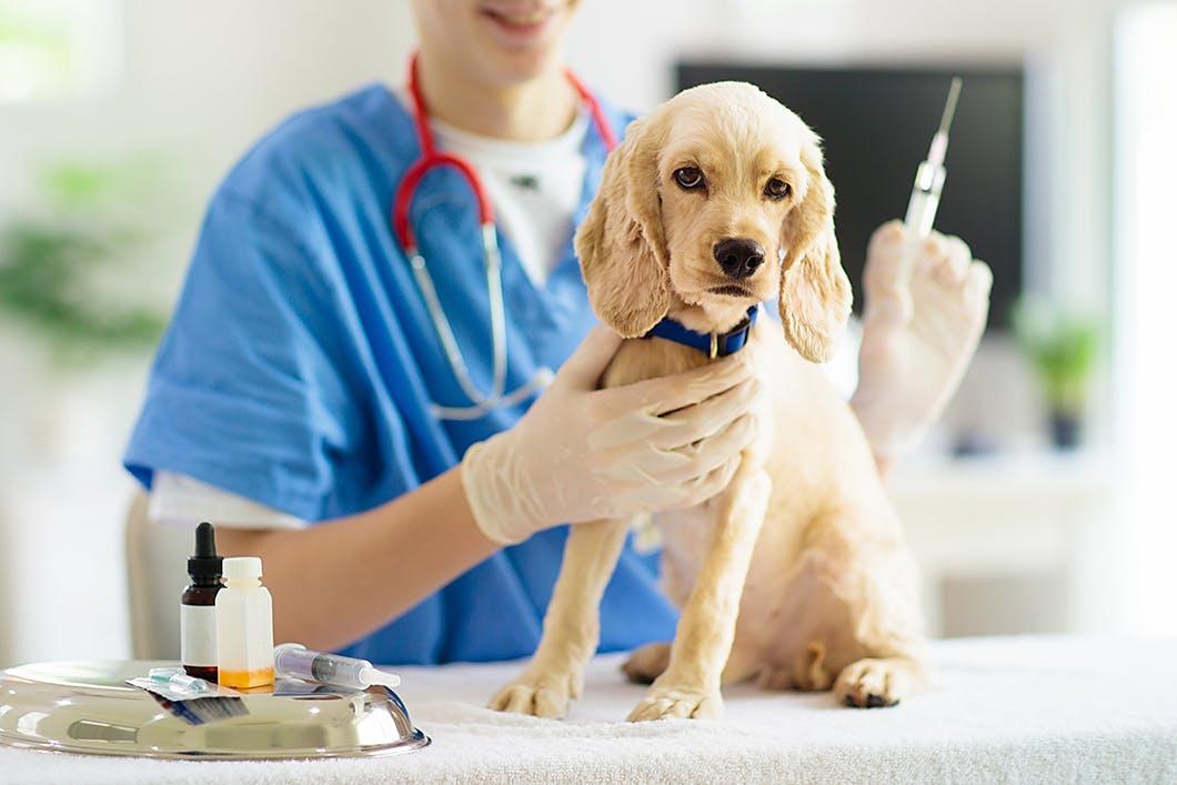 【獣医師監修】犬のワクチンは何種類がよいの?予防できる病気を解説