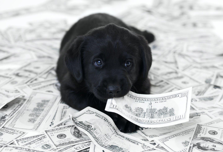 迎える前に知っておこう!犬の一生にかかるお金はどれくらい?