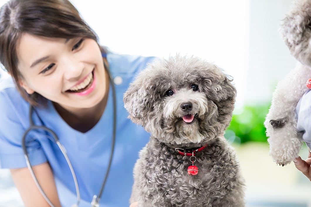 獣医師さんと信頼関係を築くための4つのポイント!愛犬を安心して任せよう