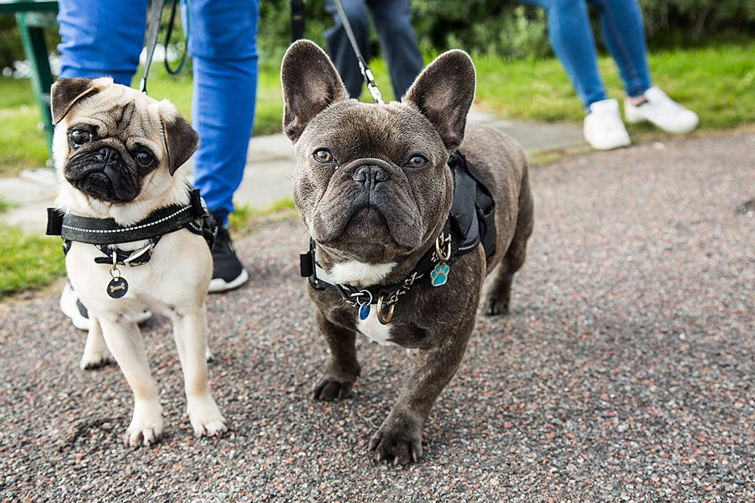 【獣医師監修】老犬は要注意!犬の関節炎の症状・原因・予防法は?