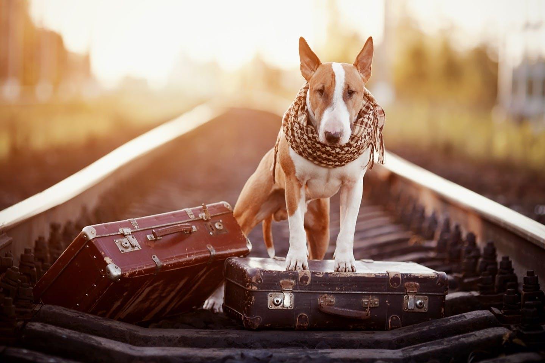 犬を電車に乗せる練習法は?犬と電車に乗るときのマナーや注意点