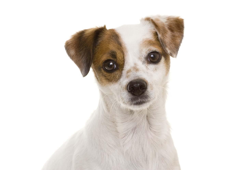 犬の頭・顔・耳