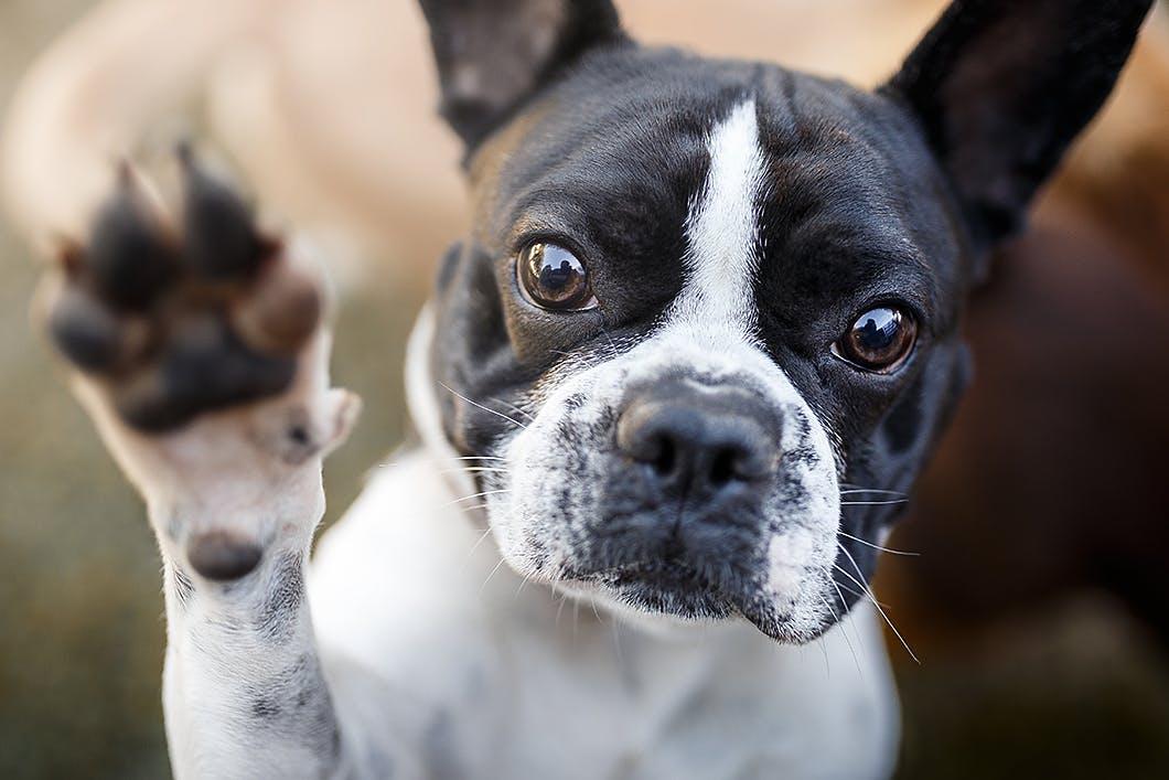 子犬から成犬まで。トイレのしつけのお悩みアレコレに答えます!