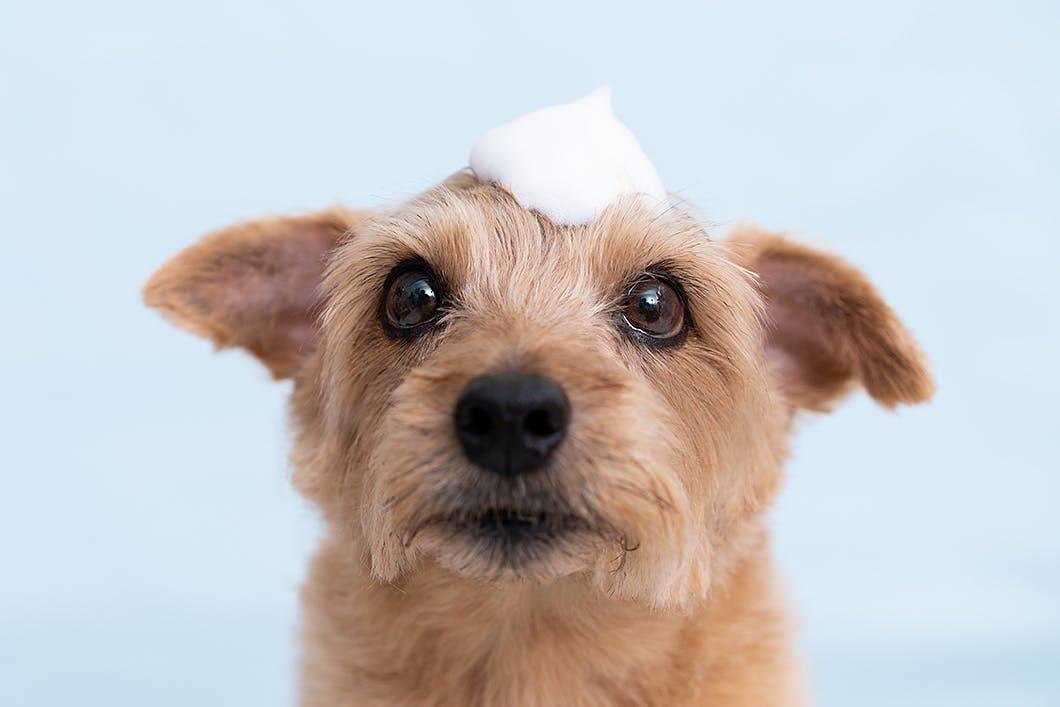 顔に水がかかると嫌がる理由は?犬のシャンプーに関するFAQ