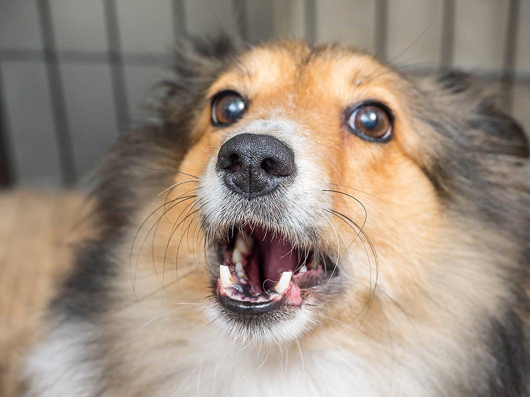 無駄吠えを防止するには?犬を安心させて吠えさせないしつけ法
