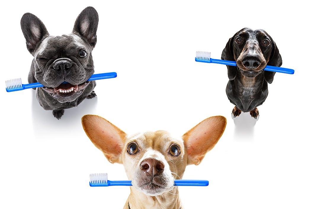 歯磨きシートだけでケアできる?犬のデンタルケアグッズに関するFAQ