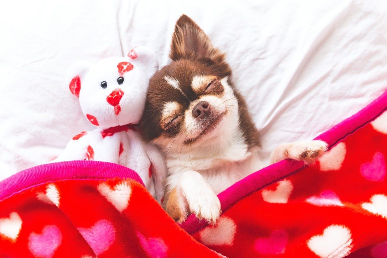 【獣医師監修】子犬がストレスを感じるのはどんなとき?解消方法は?