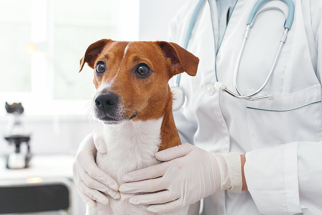 愛犬のためにも心がけたい!信頼できる動物病院との上手な付き合い方