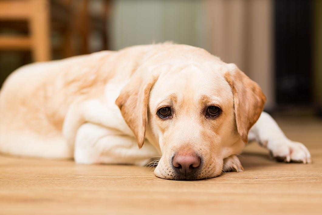 愛犬のストレスを見抜こう!その行動、じつは「ストレスサイン」かも!