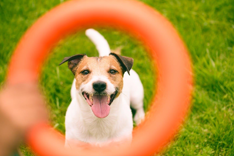 間違ったやり方では効果も半減?注意したい犬の散歩法&遊び方