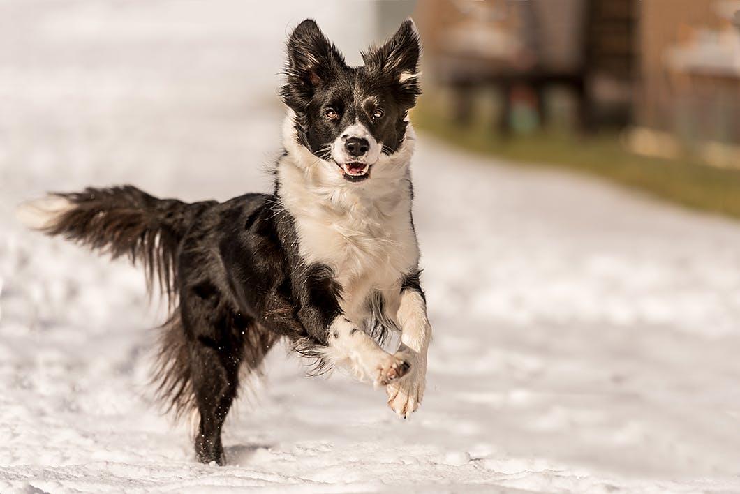 犬が頭やしっぽを振る理由は?しぐさから犬の気持ちを知ろう!