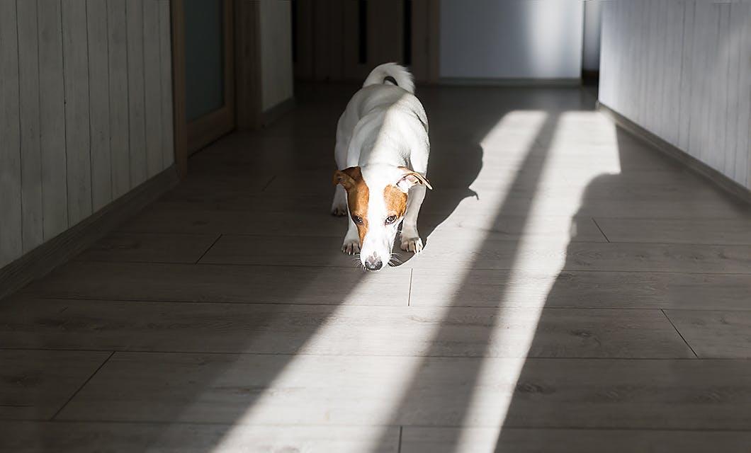 理由が知りたい?ニオイを嗅ぐしぐさに隠れた犬の意外な気持ち
