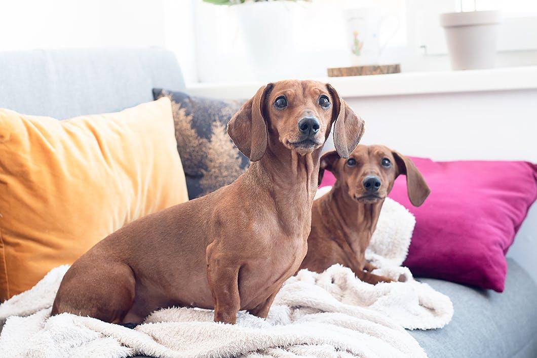 【獣医師監修】警戒しやすいものに慣れさせよう!吠えない犬に育てるしつけの方法