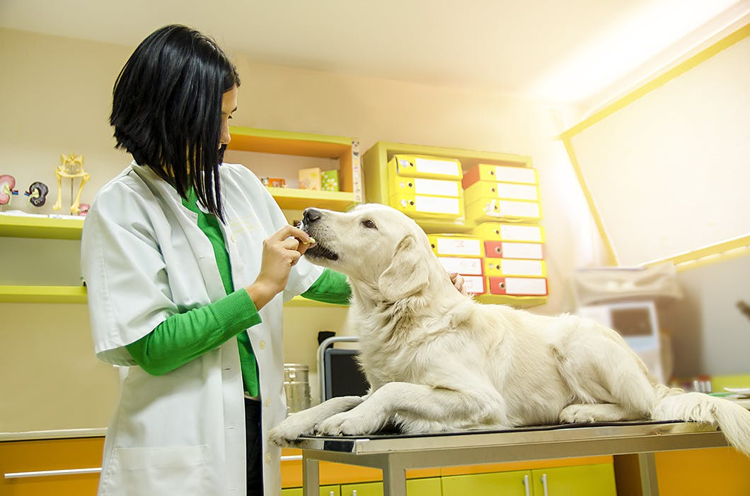 犬を診察する獣医師
