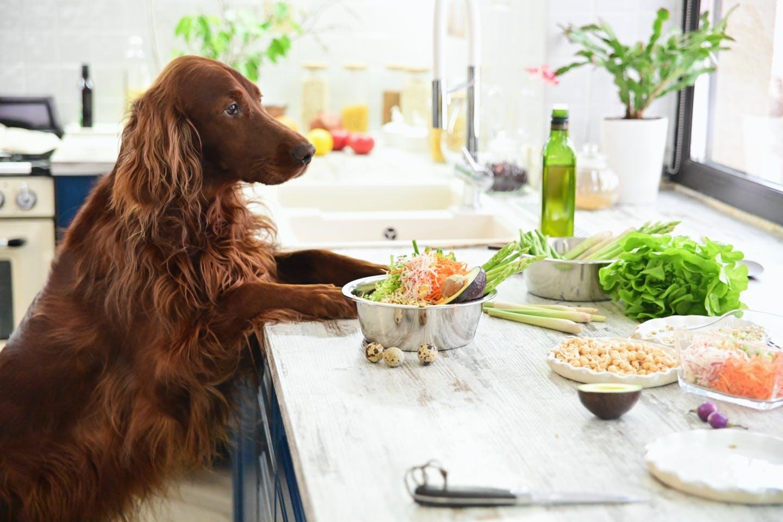 【8/31 野菜の日】犬が食べてもいい野菜はどれ?分量は?食べてはいけない野菜も解説!