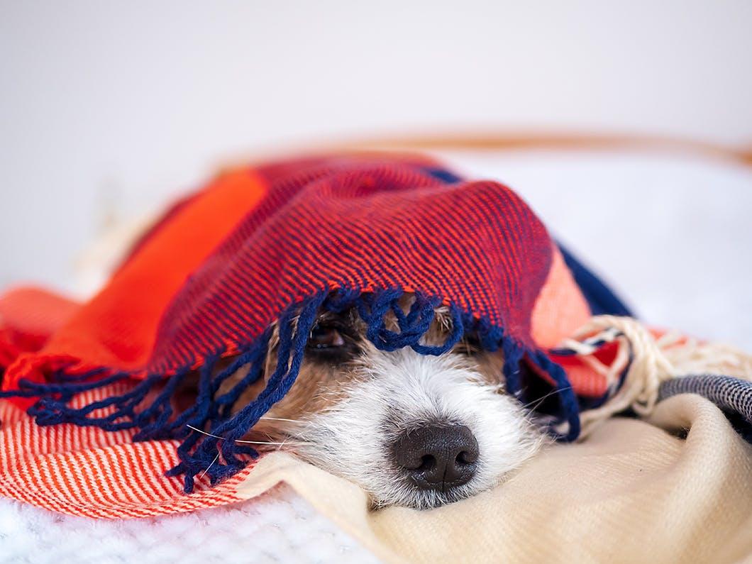 今すぐ愛犬と避難できますか?飼い主がすべき災害対策とは