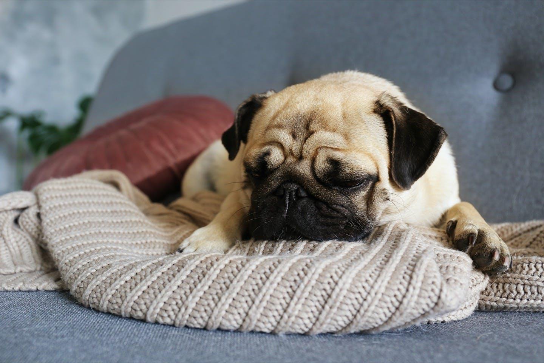 【獣医師監修】老犬がストレスを感じるのはどんなとき?解消法は?