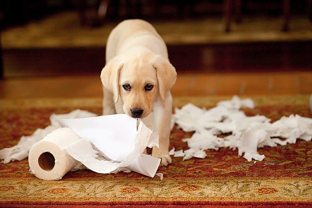 子犬のための安全な部屋づくり!家の中にある危険なものはこれだ!