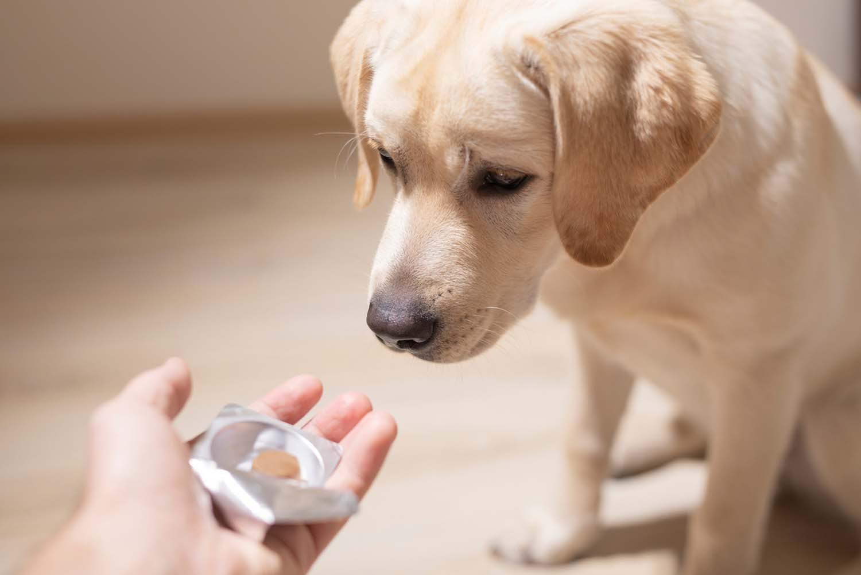 方 ませ 犬 飲 薬