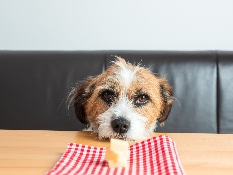 犬に食べさせても大丈夫?大豆製品・乳製品を与える際の注意点