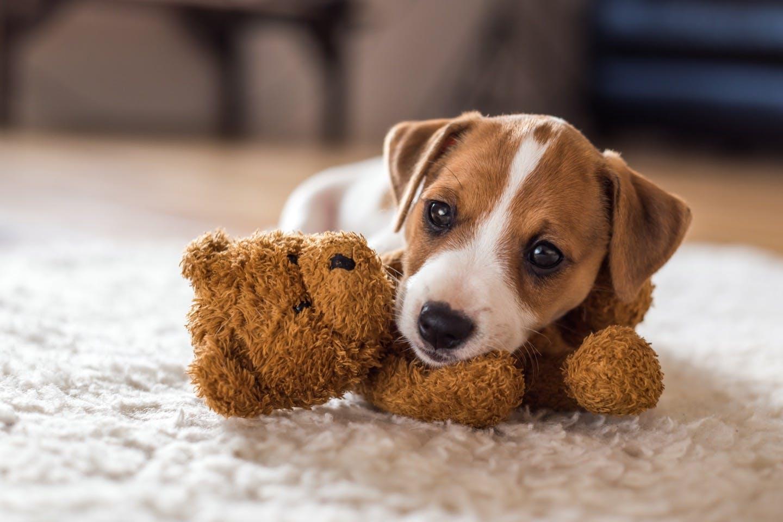 犬を飼うことが決まったら!役割分担などを決めてしっかり準備しよう