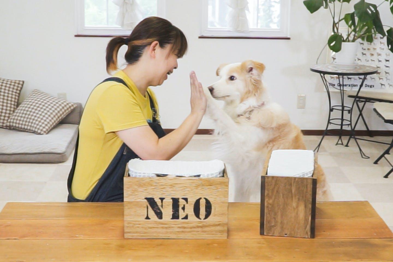 愛犬と簡単DIY「ペットシーツボックス」をステンシルシートでアレンジ!【番外編】