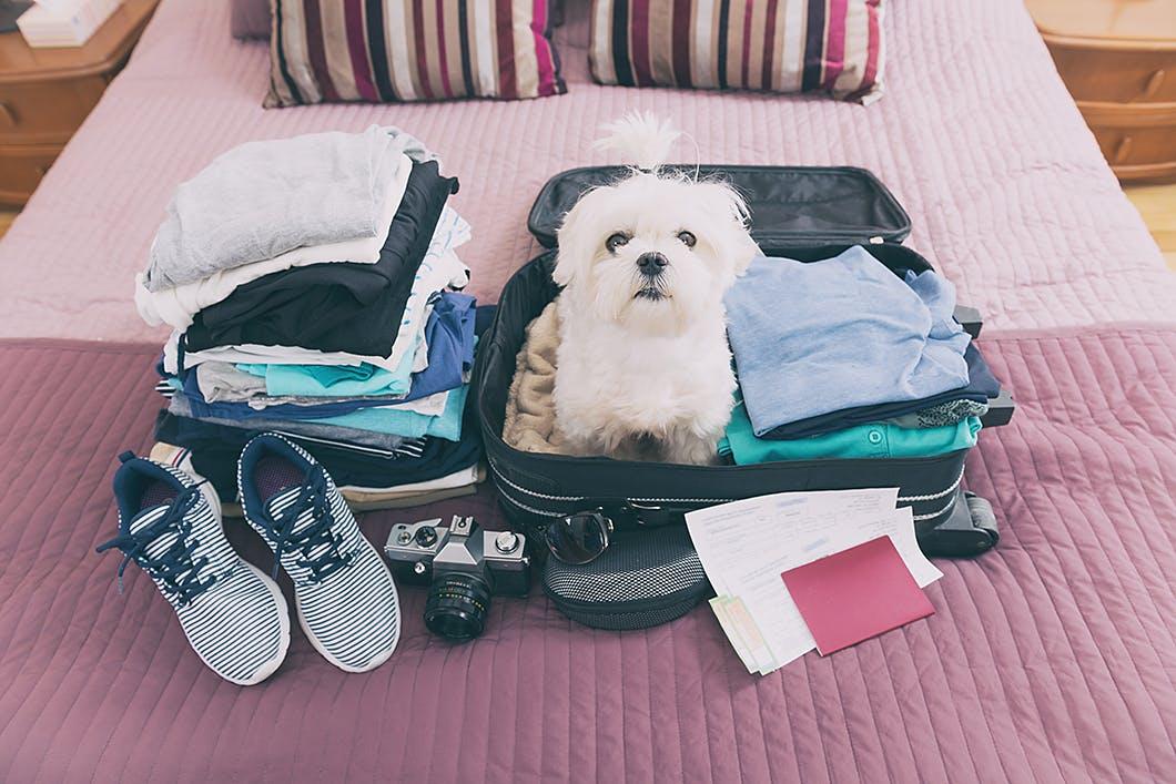 愛犬と初めての旅行を楽しむために!宿泊先でのトラブル回避術を伝授