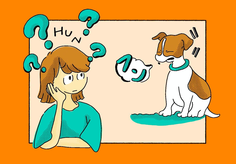 【獣医師監修】犬がフン!と鼻を鳴らすのはなぜ?理由や心理状態、注意すべき症状などについて解説