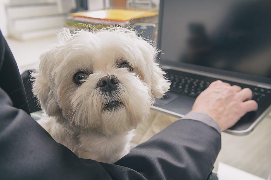 イタズラをする?ケージは必要?愛犬の留守番中の疑問に答えます!