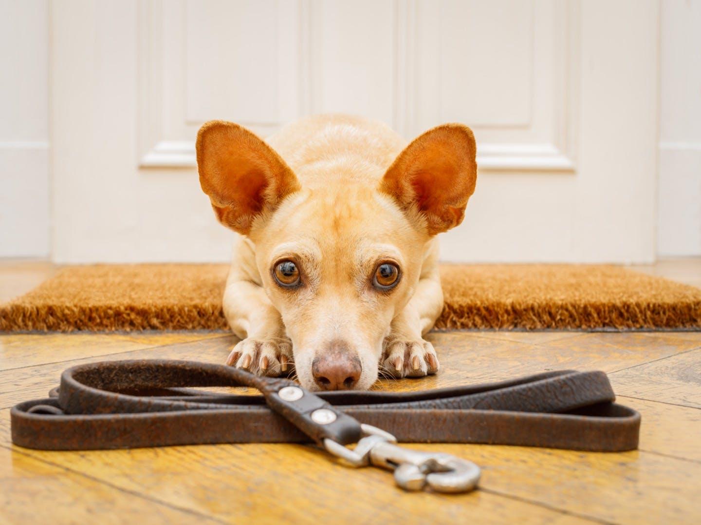 犬が散歩のときリードを引っ張るのはどうして?理由や対処法を解説!