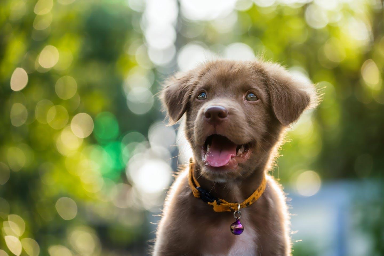 ブリーダー・保護団体・ペットショップ|3通りの犬の迎え方の違いとは?