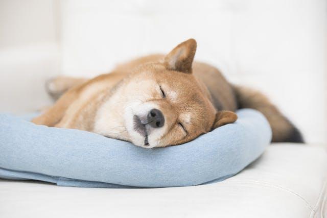 新型コロナウイルスはペットに感染する!? 東京都獣医師会の見解は?