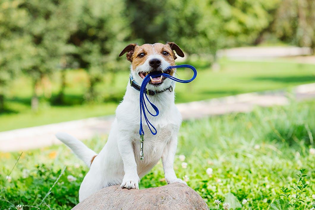 愛犬に長生きしてもらうために絶対に気をつけたい2つのポイント【獣医師監修】
