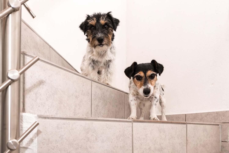【獣医師監修】犬が階段や段差を怖がる!考えられる病気は?【犬の健康診断】