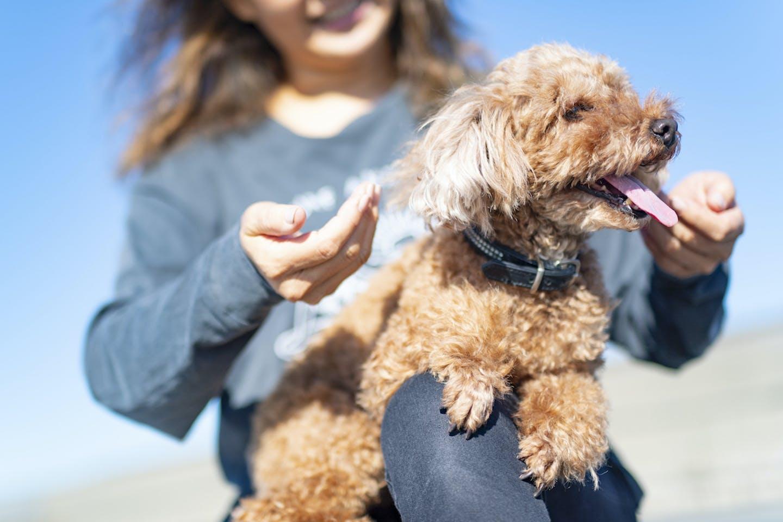 【コロナ対策】プレイズタッチ① 愛犬をリラックスさせる効果的なスキンシップ