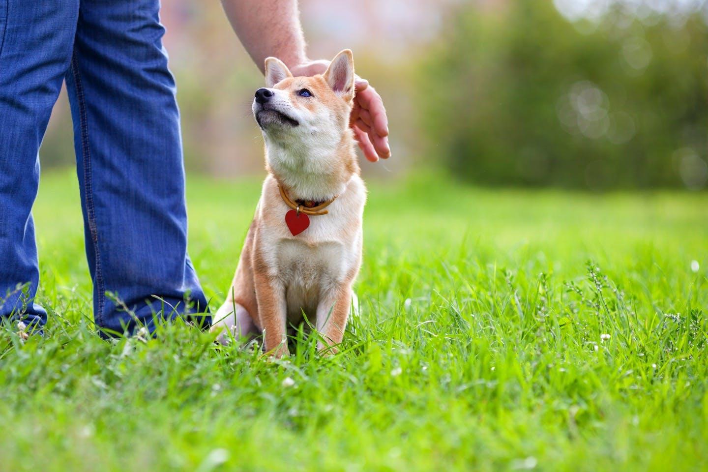 【獣医師監修】あなたの接し方は大丈夫?愛犬にストレスを与えない接し方とは
